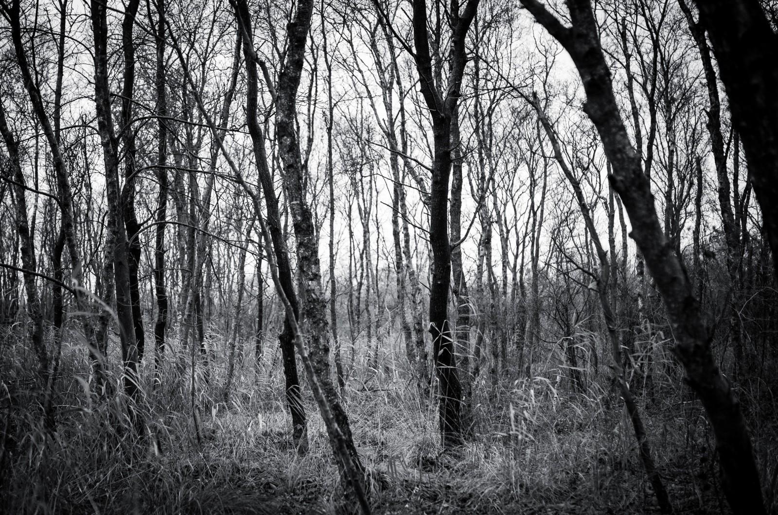 022_Nationaal_park_Weerribben-Wieden__1-1113