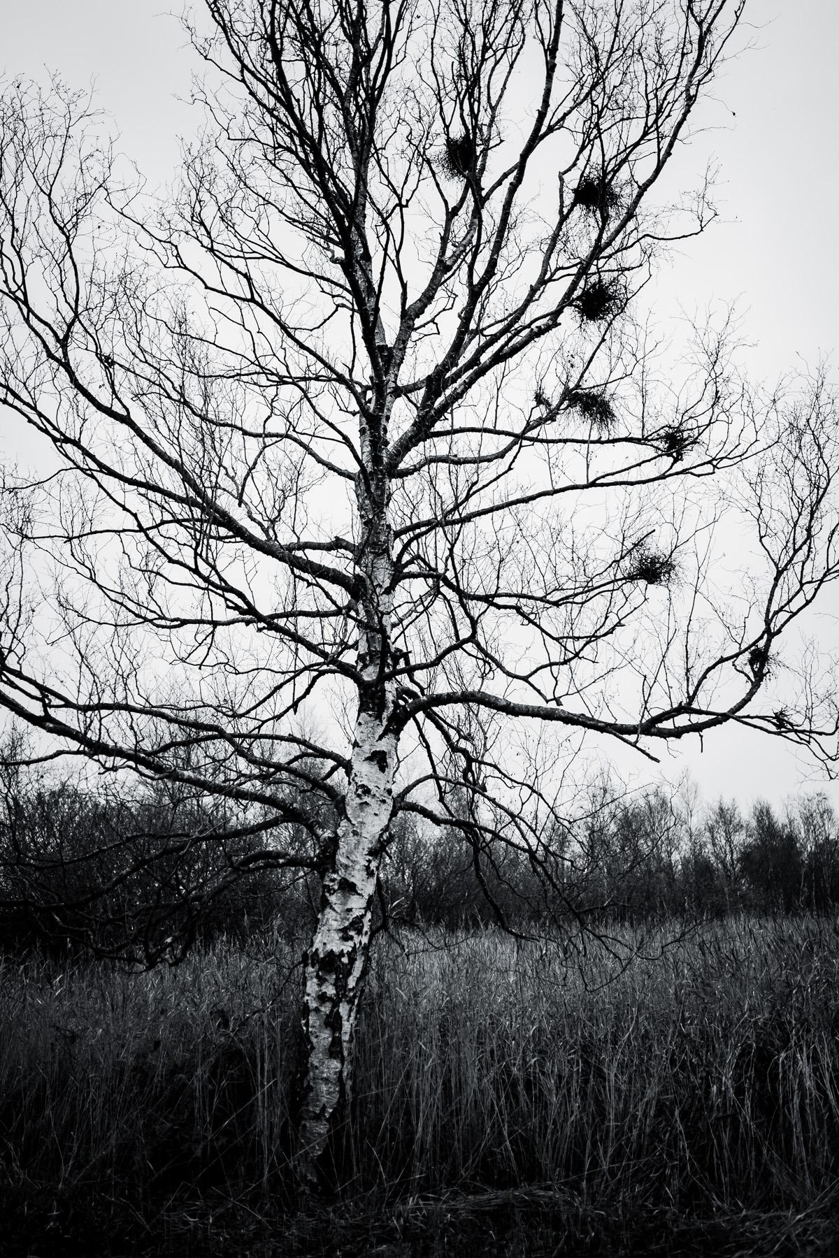 025_Nationaal_park_Weerribben-Wieden__1-1055