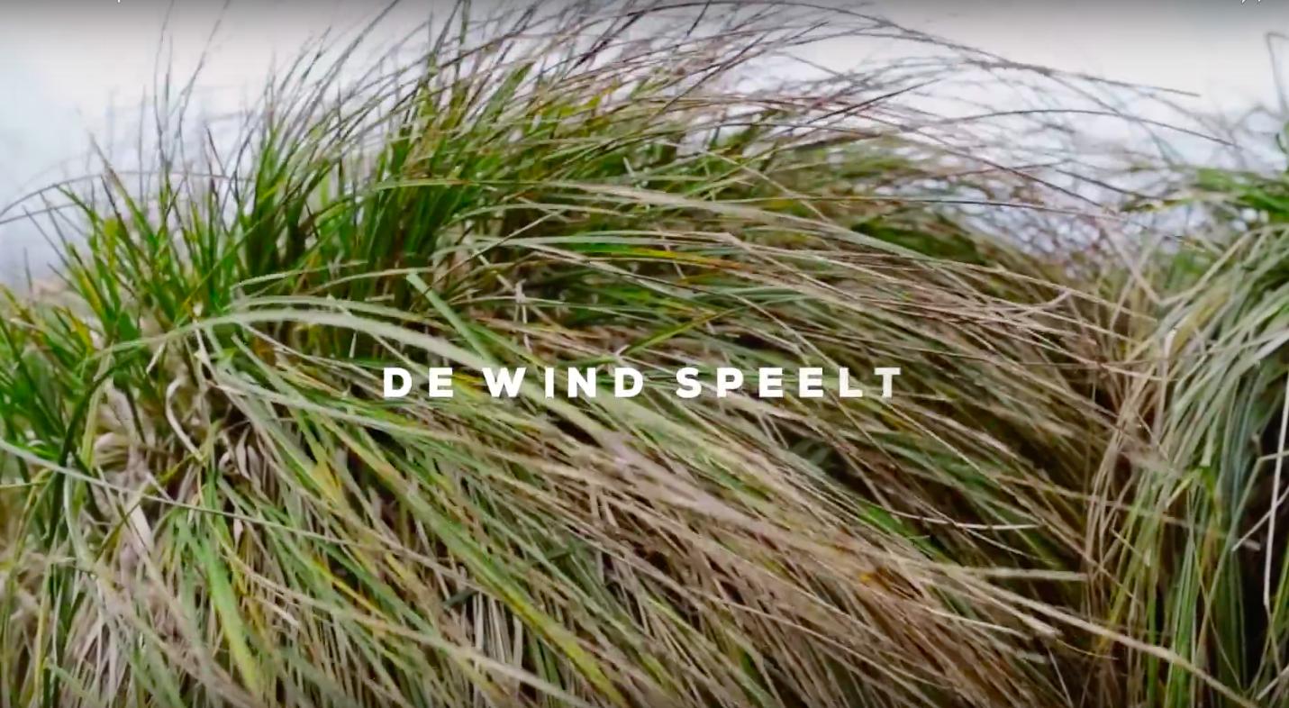 De wind speelt